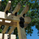 "Post to Beam Bracket Kit by OZCO Ornamental Wood Ties-4"" - Installed"